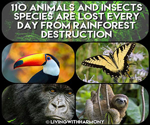 Living With Harmony: Species Lost to Deforestation