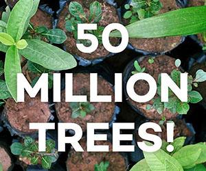 Ecosia: Fifty Million Trees Planted