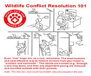 Animal Help Now: Wildlife Conflict Resolution